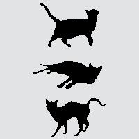 Трио черных котов