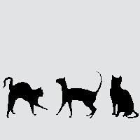 Три товарища-кошки