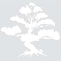 Африканское чёрное дерево