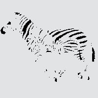 Африканские зебры