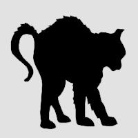 Взъерошенный кот